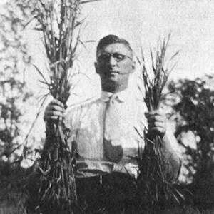 Nat Lindsay showing the difference between fertilized and non-fertilized plot of oats in 1925.